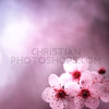 Spring background with flowers and pink colors