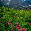 Wildflowers Leading Into The Mountains - Grinnell Glacier Trail, Many Glacier, Glacier National Park, Montana