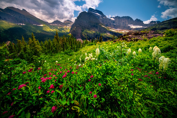 Lying Bed Of Flowers In The Meadow - Grinnell Glacier Trail, Many Glacier, Glacier National Park, Montana