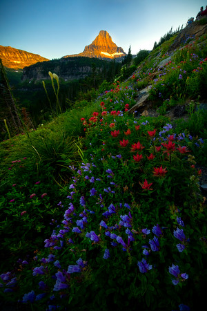 Follow The Color To The Mountains - Going To The Sun Road, Glacier National Park, Montana