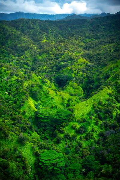 Flying Over The Tropical Forest Valleys - Waimea Canyon, Kauai, Hawaii