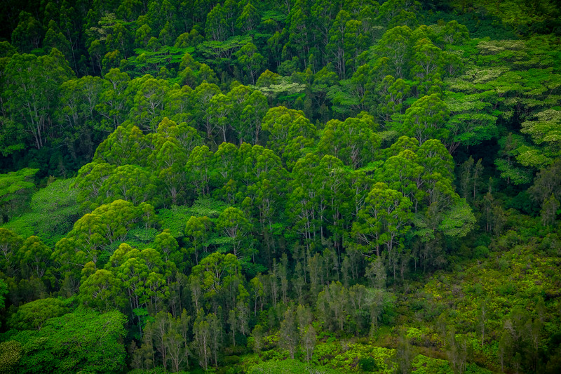 A Look From Above Of The Jungle Rooftop - Lihue Valley, Kauai, Hawaii