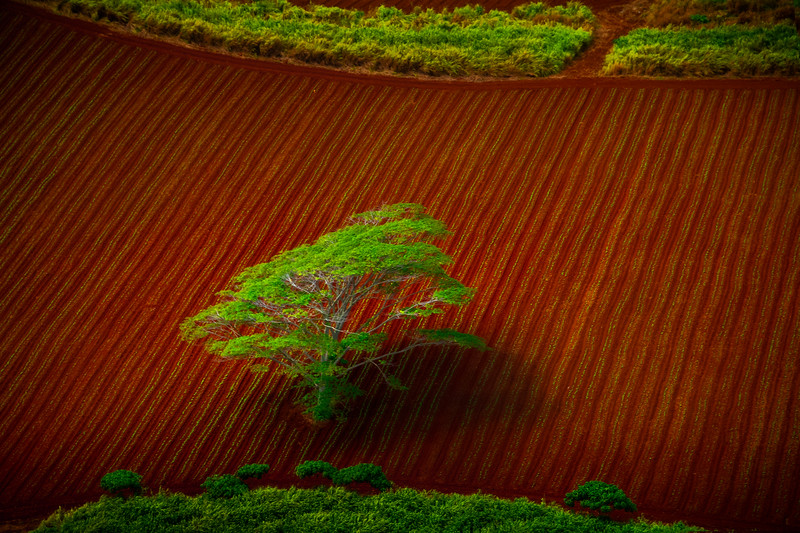 Moments Of Red And Green From All Above - Lihue Valley, Kauai, Hawaii