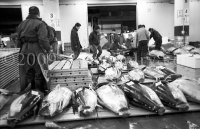 Tokyo - Tsukiji Fish Market - Japan - ©2004 | Rawlandry