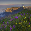 Oregon Coast, Oregon Stock Images_20