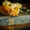 I dried yellow flower on top of a 100-year-old bible laying on a dark wooden table