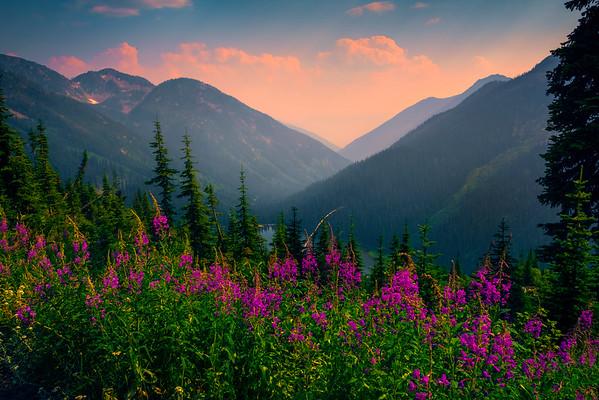 Overlooking Gibson Lake And Fireweed Wildflowers Kokanee Lake, Kootenay Rockies, BC, Canada