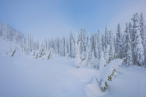 A Solid Wall Of White Snow Ghosts - Paradise Area, Mount Rainier National Park, WA