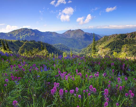Images taken from around Washington State