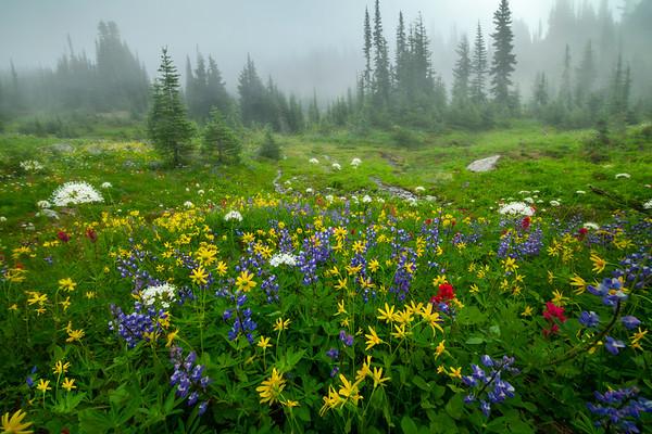 Wildflower Meadows In The Foggy Mist - Mount Rainier National Park, WA