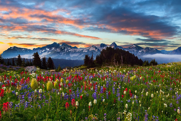 Mt Rainier And Tattosh Range In Summer - Paradise Area, Mount Rainier National Park, Washington