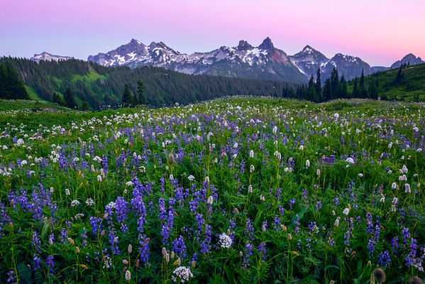 Tatoosh Range Under Twilight Light - Paradise Meadows, Mount Rainier National Park, WA