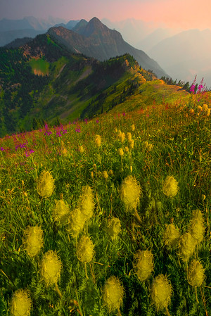 Western Anemone Wildflowers Looking Into Valley - Idaho Pass, Kootenay Rockies, BC, Canada