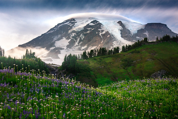 Mt Rainier In Tight From Paradise Meadows At Sunset_ - Mount Rainier National Park, WA