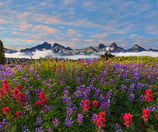 Low Angle Of Tattosh Range And Wildflowers - Paradise Area, Mount Rainier National Park, Washington