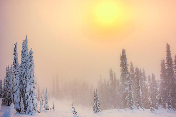 Sun Breaking Through Th Heavy Fog - Paradise Area, Mount Rainier National Park, WA