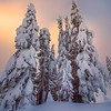 Frozen In Sunset Bliss - Paradise Area, Mount Rainier National Park, WA
