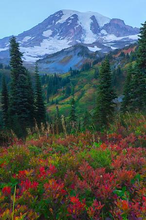 A Mix Of Reds And Greens - Mazama Ridge, Mount Rainier National Park, WA