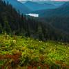 Pink Heather Meadows Looking Down On Dewey Lake - Naches Peak Trail,  Mt Rainier National Park, WA