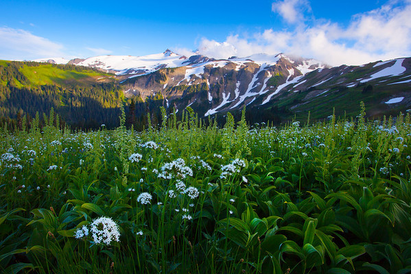 Taking It In Wide Angle - Skyline Divide, Mount Baker, North Cascades National Park, WA