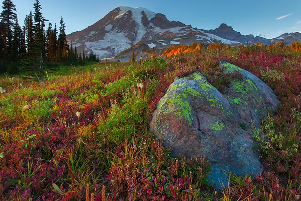 Lichen Rocks And Fall Colors - Mazama Ridge, Mount Rainier National Park, WA