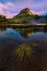 Lily Pads  - Lower Tipsoo Lake,  Mount Rainier National Park, Washington