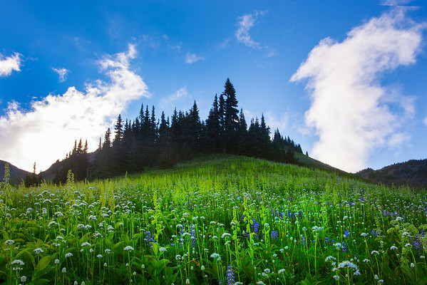 Rising Valleys And Meadows - Skyline Divide, Mount Baker, North Cascades National Park, WA