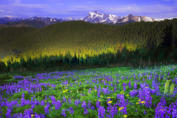 Hints Of Light  And Shadow - Skyline Divide, Mount Baker, North Cascades National Park, WA