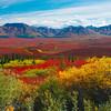 Colors In Full Mode On The Tundra - Denali National Park, Alaska