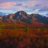Rising Peaks And Color - Denali National Park, Alaska