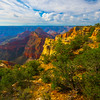 Green Foliage On The Roof Tops - North Rim, Grand Canyon Nat Park, Arizona