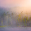 Early Morning Mist At Mt Rainier