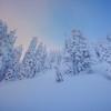 Surreal Soft Light Overhead - Paradise Area, Mount Rainier National Park, WA