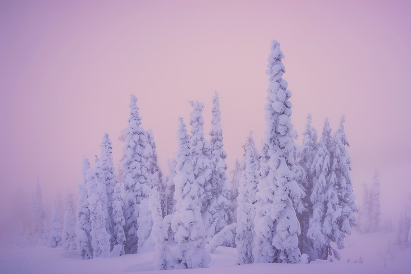 Sun Sets On Snow Ghosts As Fog Moves Back In - Paradise Area, Mount Rainier National Park, WA