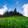 Images from the North Cascades National Park