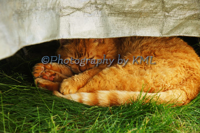 an orange cat sleeping under a tarp