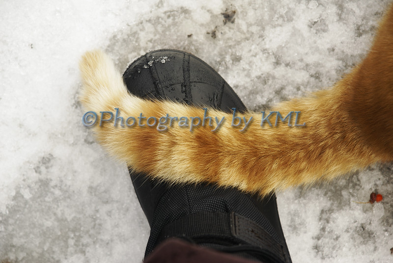 a cat's tail over a boot in the snow