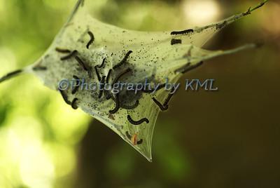 Caterpillar Nest
