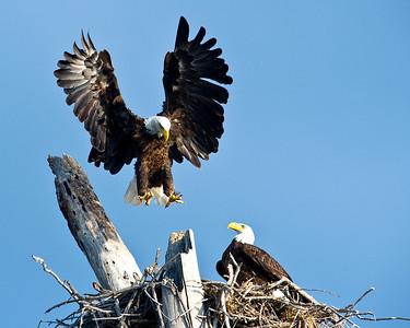 Landing in the Nest
