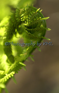 Green Fern Macro