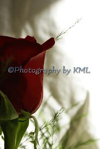 Red Rose Profile
