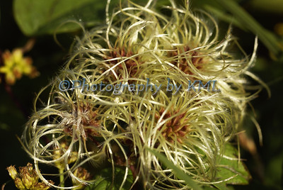Stringy Plant in the Autumn