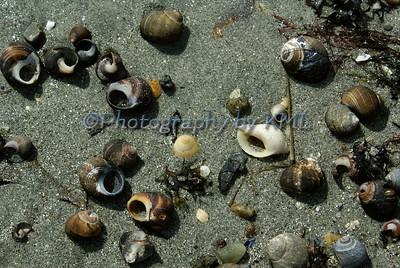 Snail Shells