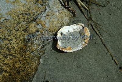 Empty Crab Shell