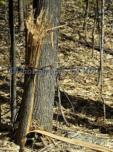 Shredded Tree