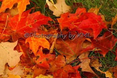 Bright Autumn Leaves