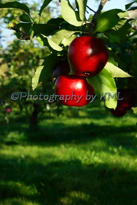 Red Shiny Apples