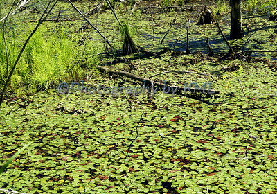 Green in the Swamp