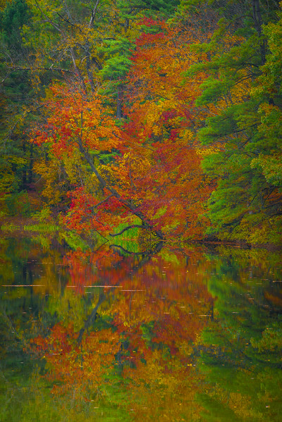 Leaning Over Colors Reflected In Lake