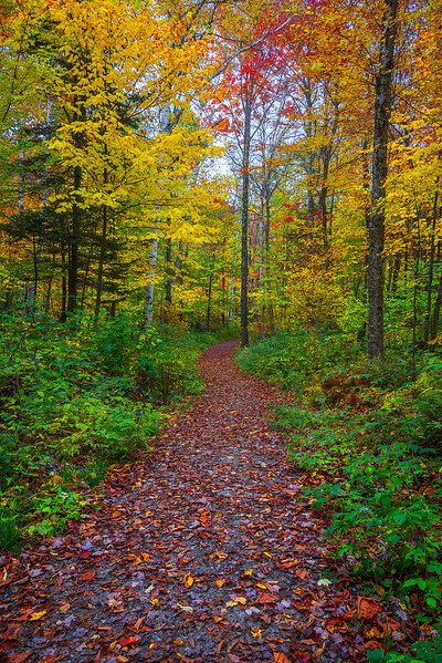 Autumn Trails In The Chittenden Reservoir